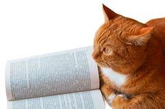 Κόκκινα γάτα και βιβλίο, βιβλίο ανάγνωσης γατών, βιβλίο ανοικτό και δίπλα σε μια κόκκινη γάτα σπιτιών, βιβλίο-u-στροφή Στοκ Φωτογραφία