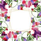 Κόκκινα γλυκά λουλούδια μπιζελιών Σύνολο απεικόνισης υποβάθρου Watercolor Χρυσό κρύσταλλο πλαισίων Γεωμετρικό polyhedron πετρών κ ελεύθερη απεικόνιση δικαιώματος