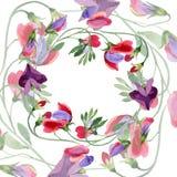 Κόκκινα γλυκά λουλούδια μπιζελιών Φύλλο άνοιξη wildflower Σύνολο απεικόνισης υποβάθρου Watercolor Floral στεφάνι πλαισίων διανυσματική απεικόνιση
