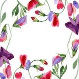 Κόκκινα γλυκά λουλούδια μπιζελιών Φύλλο άνοιξη wildflower Σύνολο απεικόνισης Watercolor Floral σύνορα στο άσπρο υπόβαθρο ελεύθερη απεικόνιση δικαιώματος