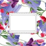 Κόκκινα γλυκά λουλούδια μπιζελιών Φύλλο άνοιξη wildflower Σύνολο απεικόνισης υποβάθρου Watercolor Τετράγωνο πλαισίων απεικόνιση αποθεμάτων