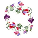 Κόκκινα γλυκά λουλούδια μπιζελιών Φύλλο άνοιξη wildflower Σύνολο απεικόνισης υποβάθρου Watercolor Floral στεφάνι πλαισίων απεικόνιση αποθεμάτων