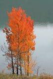 κόκκινα δέντρα Στοκ εικόνα με δικαίωμα ελεύθερης χρήσης