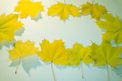 Κόκκινα, κίτρινα, πορτοκαλιά φύλλα φθινοπώρου στο μπλε νερό δασική εποχή μονοπατιών πτώσης φθινοπώρου Ανασκόπηση φύλλων φθινοπώρο Στοκ εικόνα με δικαίωμα ελεύθερης χρήσης