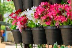 Κόκκινα και άσπρα λουλούδια μαύρα πλαστικά flowerpots Στοκ Φωτογραφίες