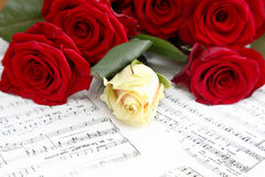 Κόκκινα και άσπρα τριαντάφυλλα στοκ φωτογραφία