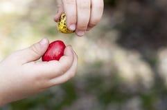 Κόκκινα και κίτρινα βαμμένα αυγά ορτυκιών στα χέρια παιδιών ` s Στοκ εικόνα με δικαίωμα ελεύθερης χρήσης