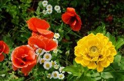 Κόκκινα και κίτρινα λουλούδια σε πράσινο Στοκ Φωτογραφίες