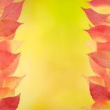 Κόκκινα και κίτρινα φύλλα στην κίτρινη ανασκόπηση Στοκ Φωτογραφία
