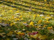 Κόκκινα και κίτρινα φύλλα σφενδάμου στη χλόη στοκ εικόνες