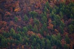 Κόκκινα και πράσινα δέντρα Στοκ Φωτογραφία