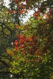 Κόκκινα και πράσινα φύλλα στο πάρκο Στοκ φωτογραφία με δικαίωμα ελεύθερης χρήσης