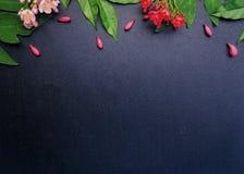 Κόκκινα και ρόδινα λουλούδια με το μαύρο υπόβαθρο Στοκ εικόνα με δικαίωμα ελεύθερης χρήσης