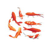 Κόκκινα και χρυσά koi στοιχεία σχεδίου ψαριών διανυσματικά Στοκ εικόνα με δικαίωμα ελεύθερης χρήσης