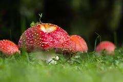 Κόκκινα καπέλα Στοκ Εικόνα