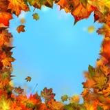 Κόκκινα καφετιά και κίτρινα φύλλα σφενδάμου, φθινοπωρινό πλαίσιο, χρυσό φθινόπωρο Στοκ Εικόνα