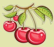 Κόκκινα κεράσια. Φρούτα που απομονώνονται διανυσματικά για το σχέδιο Στοκ Φωτογραφία