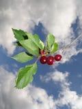 Κόκκινα κεράσια Στοκ φωτογραφία με δικαίωμα ελεύθερης χρήσης