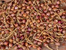 Κόκκινα κρεμμύδια στην αφθονία Υπόβαθρο Στοκ Εικόνες