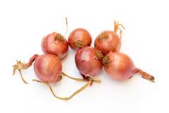 Κόκκινα κρεμμύδια Στοκ Φωτογραφία