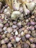 Κόκκινα κρεμμύδι & σκόρδο Στοκ εικόνα με δικαίωμα ελεύθερης χρήσης