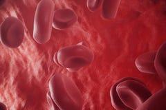 Κόκκινα κύτταρα αίματος: αρμόδιος για τη μεταφορά οξυγόνου, το αίμα κανονισμού pH, τρόφιμα και μια προστασία των κλουβιών Στοκ Εικόνες