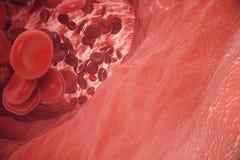 Κόκκινα κύτταρα αίματος στην αρτηρία, ροή μέσα στο σώμα, ιατρική ανθρώπινη υγειονομική περίθαλψη έννοιας, τρισδιάστατη απόδοση Στοκ Εικόνες