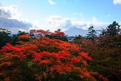 Κόκκινα λουλούδια ένα από το ομορφότερο φθινόπωρο στοκ εικόνες