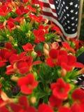 Κόκκινα λουλούδια, αμερικανική σημαία 2 Στοκ Εικόνα