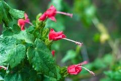 Κόκκινα λουλούδια μετά από τη βροχή στοκ εικόνες