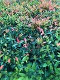 Κόκκινα λουλούδια με τα πράσινες φύλλα και τη χλόη στοκ εικόνες με δικαίωμα ελεύθερης χρήσης