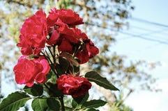 Κόκκινα λουλούδια με το θολωμένο υπόβαθρο στοκ εικόνα με δικαίωμα ελεύθερης χρήσης