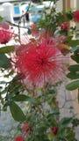 Κόκκινα λουλούδια μια ηλιόλουστη ημέρα στοκ εικόνες με δικαίωμα ελεύθερης χρήσης