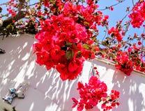 Κόκκινα λουλούδια που ανθίζουν στην άσπρη στέγη στην Ελλάδα Στοκ φωτογραφία με δικαίωμα ελεύθερης χρήσης