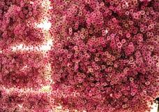 Κόκκινα λουλούδια που λάμπουν από μέσα από στοκ φωτογραφία με δικαίωμα ελεύθερης χρήσης
