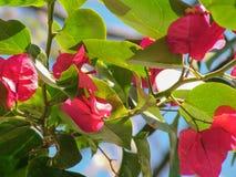 Κόκκινα λουλούδια στα όμορφα χρώματα με το θολωμένο υπόβαθρο στοκ εικόνες με δικαίωμα ελεύθερης χρήσης
