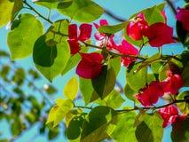 Κόκκινα λουλούδια στα όμορφα χρώματα στοκ φωτογραφίες με δικαίωμα ελεύθερης χρήσης