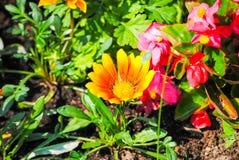 Κόκκινα λουλούδια στα flowerbeds στοκ φωτογραφία με δικαίωμα ελεύθερης χρήσης