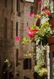 Κόκκινα λουλούδια στην οδό assisi Στοκ εικόνα με δικαίωμα ελεύθερης χρήσης
