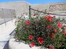 Κόκκινα λουλούδια στον ήλιο Στοκ Εικόνες