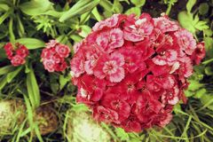 Κόκκινα λουλούδια στον κήπο στοκ φωτογραφίες