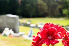 Κόκκινα λουλούδια υπαίθρια στο νεκροταφείο κοντά στα δέντρα Στοκ εικόνα με δικαίωμα ελεύθερης χρήσης