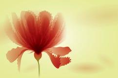 Κόκκινα λουλούδια Στοκ Εικόνες
