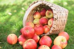 Κόκκινα μήλα σε ένα καλάθι Στοκ φωτογραφία με δικαίωμα ελεύθερης χρήσης