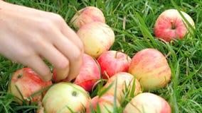Κόκκινα μήλα στη χλόη το καλοκαίρι φιλμ μικρού μήκους