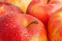 Κόκκινα μήλα Στοκ Φωτογραφία