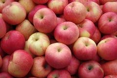 Κόκκινα μήλα Στοκ εικόνα με δικαίωμα ελεύθερης χρήσης