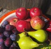 Κόκκινα μήλα, πράσινα αχλάδια και δαμάσκηνα σε ένα κύπελλο σιδήρου Στοκ εικόνες με δικαίωμα ελεύθερης χρήσης