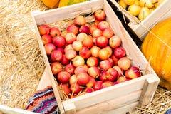 Κόκκινα μήλα σε ένα κιβώτιο με την κολοκύθα Στοκ φωτογραφία με δικαίωμα ελεύθερης χρήσης