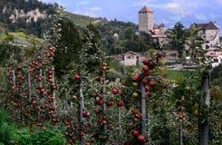 Κόκκινα μήλα στο υπόβαθρο του Τυρόλου Castle ανασκόπηση που θολώνεται Στοκ φωτογραφία με δικαίωμα ελεύθερης χρήσης
